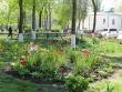Квітуча лікарня: конкурс квіткових газонів